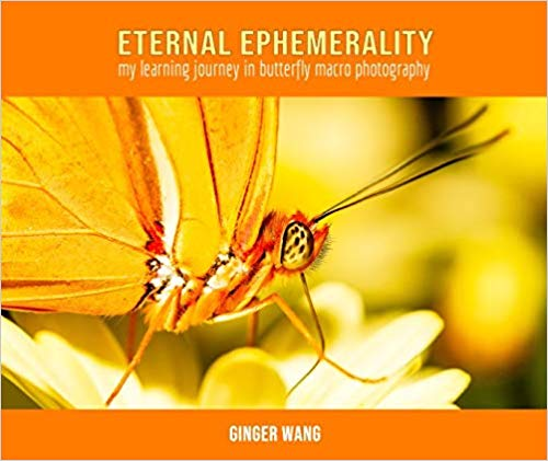 Eternal Ephemerality : Ginger Wang