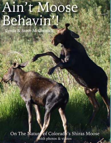 Ain't Moose Behavin'! : Lynda and Steve McCormick